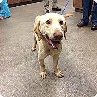 Adopt A Pet :: Smoltzy - Cumming, GA