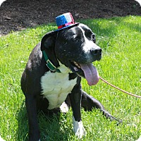 Adopt A Pet :: Jake - Plainfield, IL