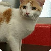 Adopt A Pet :: Cassie - Chesapeake, VA