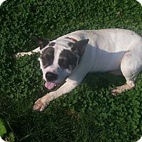 Adopt A Pet :: Butterbean - Bedminster, NJ