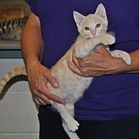 Adopt A Pet :: Alyssa - Parsons, KS