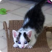 Adopt A Pet :: Sage - Burgaw, NC