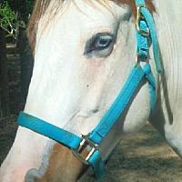 Adopt A Pet :: Cheyenne - Cantonment, FL