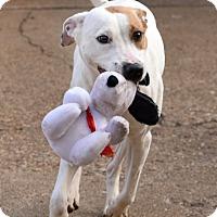 Adopt A Pet :: Navi - Chattanooga, TN