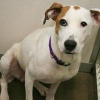 Adopt A Pet :: Lilly 2 - Bowling Green, KY