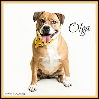 Pit Bull Terrier Mix Dog for adoption in Troy, Virginia - Olga