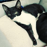 Adopt A Pet :: Astro - Yorba Linda, CA