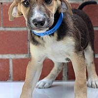 Adopt A Pet :: Tanner - Waldorf, MD