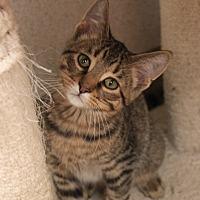 Adopt A Pet :: Frank - Naperville, IL