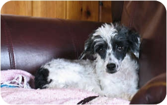 Chinese Crested Mix Dog for adoption in Flag Pond, Tennessee - Memphis Malone
