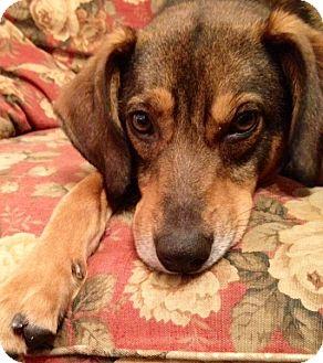 Shepherd (Unknown Type) Mix Dog for adoption in Richmond, Virginia - Zeke
