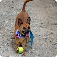 Adopt A Pet :: Twix - Burleson, TX
