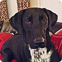 Adopt A Pet :: MARLEY - Carrollton, TX
