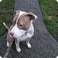 Adopt A Pet :: Hunter - Vancouver, BC