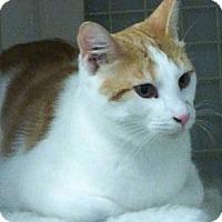 Adopt A Pet :: Bishop - Chandler, AZ