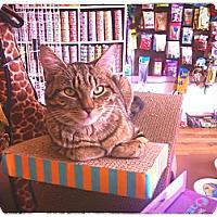 Adopt A Pet :: Joni - Brooklyn, NY