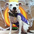 Adopt A Pet :: Sylvia - Denton, TX