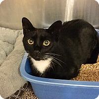 Adopt A Pet :: Abe - Colmar, PA