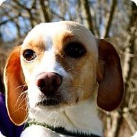Adopt A Pet :: Bella - Erwin, TN