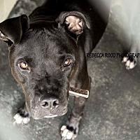 Adopt A Pet :: Alois Chan - Acworth, GA