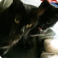 Adopt A Pet :: Mina - Naugatuck, CT