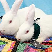 Adopt A Pet :: Josephine + Peter Rabbit - Little Rock, AR