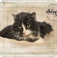 Adopt A Pet :: Harley - Belton, MO