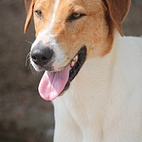 Adopt A Pet :: K.J. **In NEW HAMPSHIRE** - Mahwah, NJ