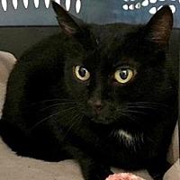 Adopt A Pet :: Willow - LaJolla, CA