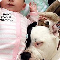 Adopt A Pet :: Lucy - Temecula, CA
