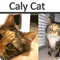 Adopt A Pet :: Calypso - Fort Worth, TX