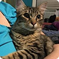 Adopt A Pet :: Stoney - New York, NY
