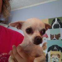 Adopt A Pet :: Lilly - New palestine, IN