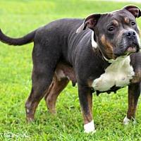 Adopt A Pet :: Aphrodite - Bedford, VA