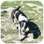 Photo 2 - Australian Cattle Dog Mix Dog for adoption in San Clemente, California - SALLY