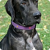 Adopt A Pet :: Ella~Adopted!! - Troy, OH