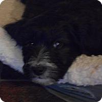 Adopt A Pet :: Beatrice - Arenas Valley, NM