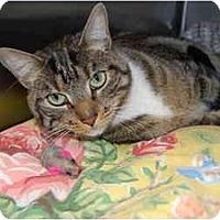 Adopt A Pet :: Scruffy - Modesto, CA