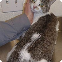 Adopt A Pet :: Shamela - Edmonton, AB