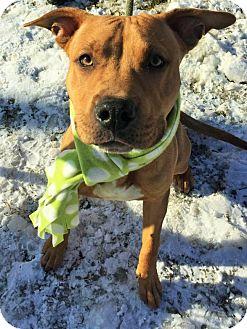 Shepherd (Unknown Type)/Terrier (Unknown Type, Medium) Mix Dog for adoption in Flint, Michigan - Chucky  #5753
