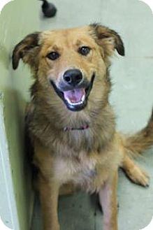 German Shepherd Dog Mix Dog for adoption in Cleveland, Mississippi - STAR: Heartworm negative!