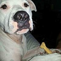 Adopt A Pet :: Domino - Loxahatchee, FL