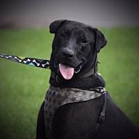 Adopt A Pet :: Coal - Austin, TX