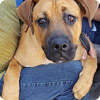 Adopt A Pet :: Bailey - Canoga Park, CA