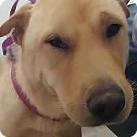 Adopt A Pet :: Nova - pending - Apple Valley, CA