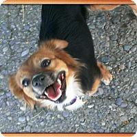 Adopt A Pet :: Talia - Mesa, AZ