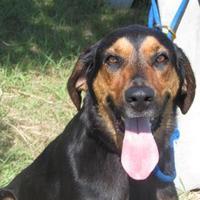 Adopt A Pet :: Apollo - Winfield, KS