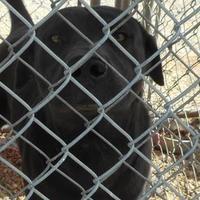 Adopt A Pet :: Noah 2 - Opelousas, LA