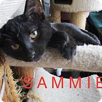 Adopt A Pet :: SAMMIE - detroit, MI