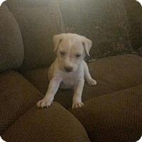 Adopt A Pet :: Merlin - Spring, TX